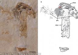 cientistas-encontram-fossil