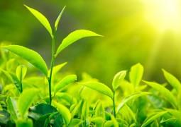 fotossintese-folhas-01