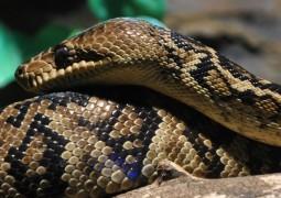 voce-tem-medo-de-cobras