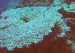 wapo-reef-resize
