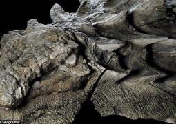 dinossauro-blindado_4