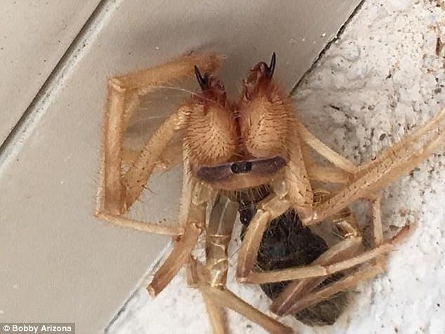 homem-encontra-criatura-metade-aranha-metade-escorpiao