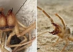 homem-encontra-criatura-metade-aranha-metade-escorpiao_1
