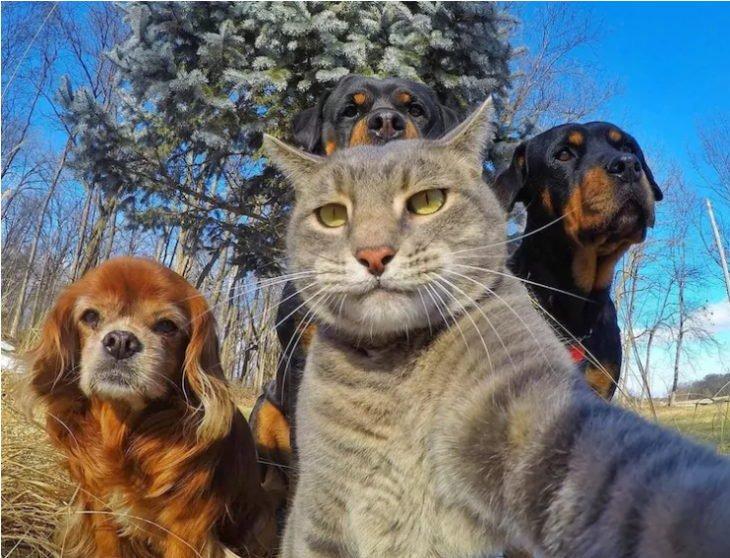 selfies-a-otro-nivel-8