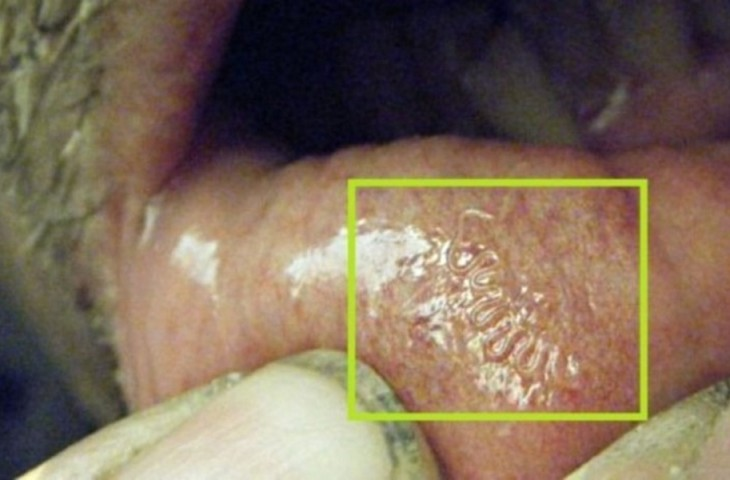 biologo-encontra-768x461