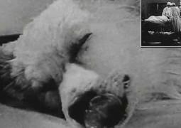 cientistas-cabeca-cachorro-robo