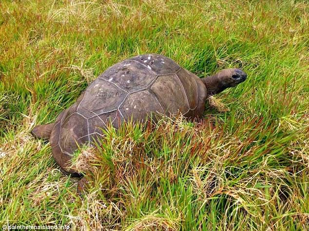 tartaruga-mais-velha-do-mundo_1