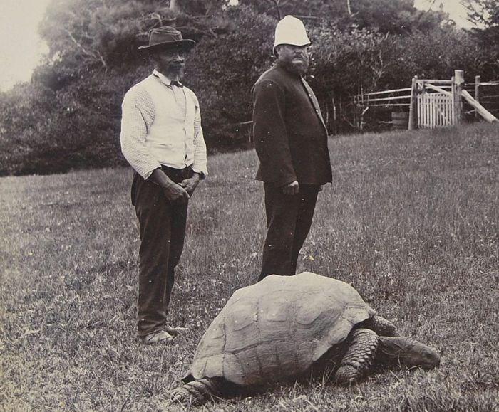 tartaruga-mais-velha-do-mundo_2