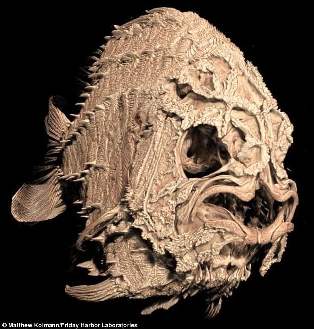 tomografia-esqueleto-peixe