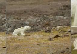 urso-morrendo-de-fome_capa