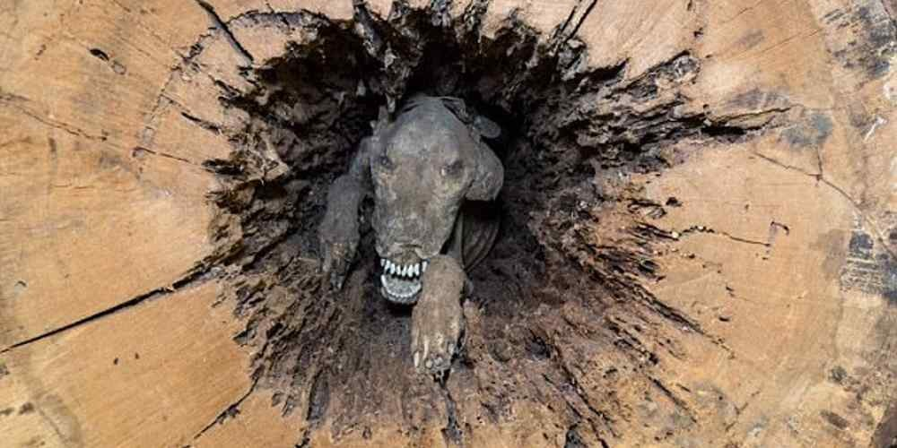 cachorro-mumificado