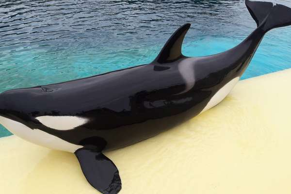 orca-baleia-que-fala_1