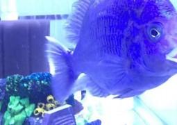 peixe-com-lábios-humanos