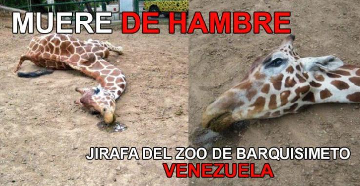 animais-morrendo-de-fome_7